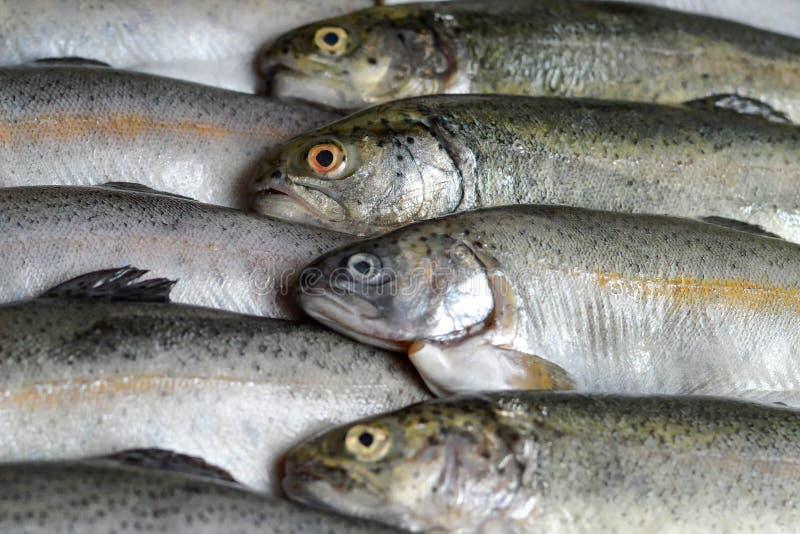 Whole raw trout fish stock photo