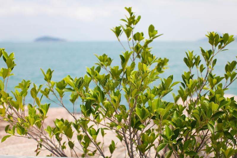 A close-up of wild green bush with an empty beach and calm sea on sunny early summer day in soft focus background. A close-up of wild green bush with an empty stock photo