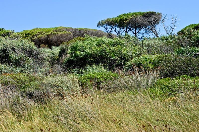 Wild nature in Caprera stock images