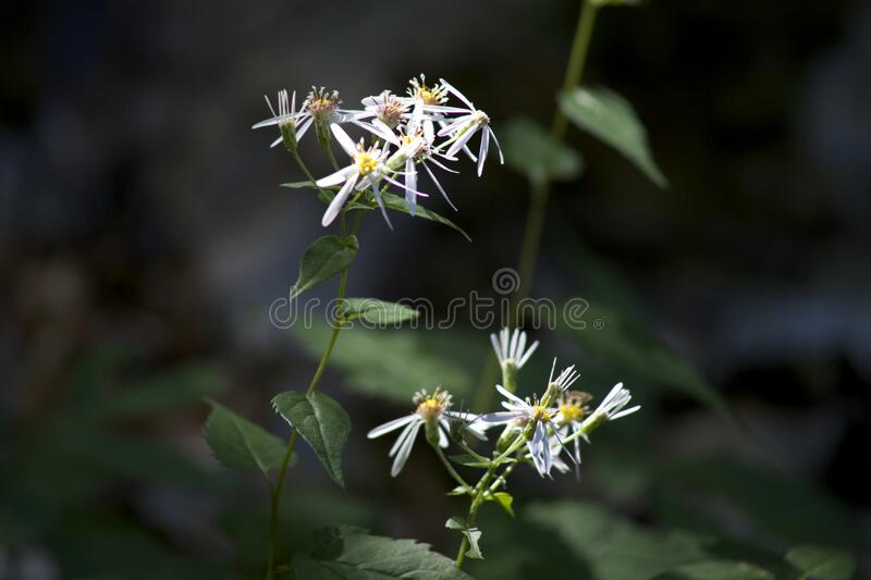 Close up of wildflowers stock image