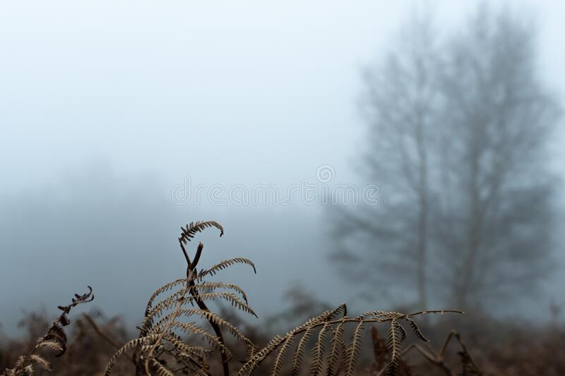 Close up of winter bracken outside on a moody winters day. Still life selective focus, artistic blur and space for message.  stock photo