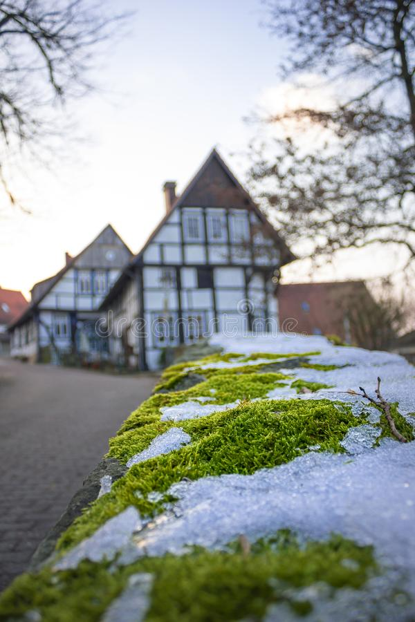 Close - up winter moss background old village royalty free stock image