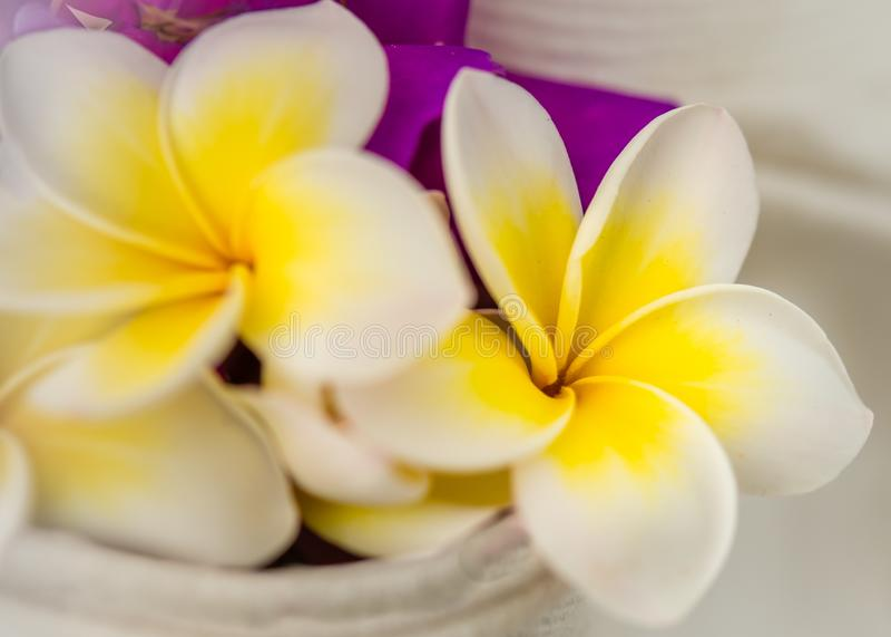 Close-up Witte en Gele Frangipanis stock afbeelding