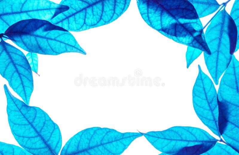 Close-up witte ruimte op het centrum van kader door kunsttoon van blauwe die bladeren op witte achtergrond wordt geïsoleerd royalty-vrije illustratie