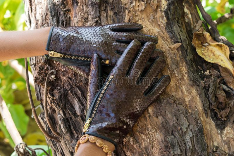 Close-up of woman hands with luxury python snakeskin gloves on a wood nature background on tropical Bali island, Indonesia. stock images