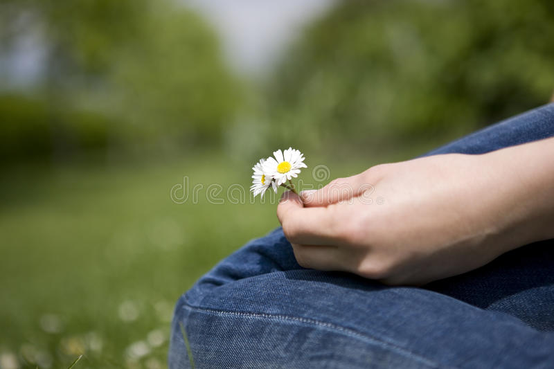 Close-up of a woman holding some daisies royalty free stock image
