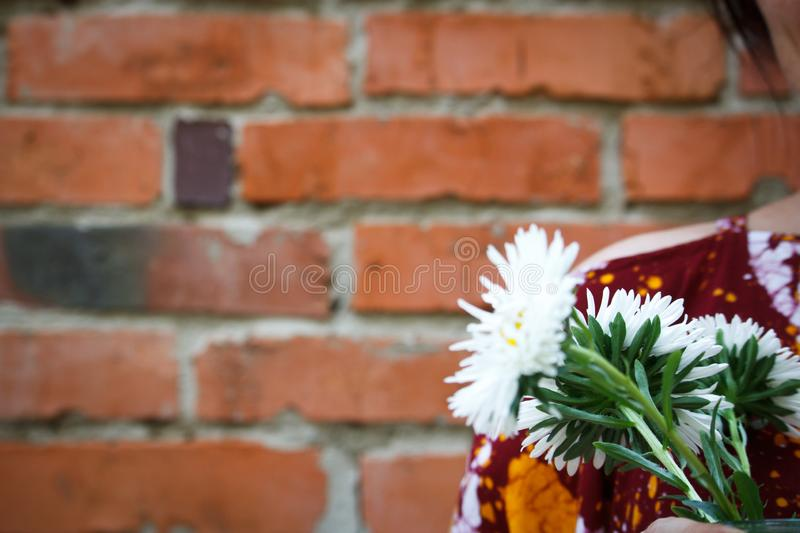 Close-up of a woman holding white asters on a backgdrop of a red brick wall, selective focus stock image