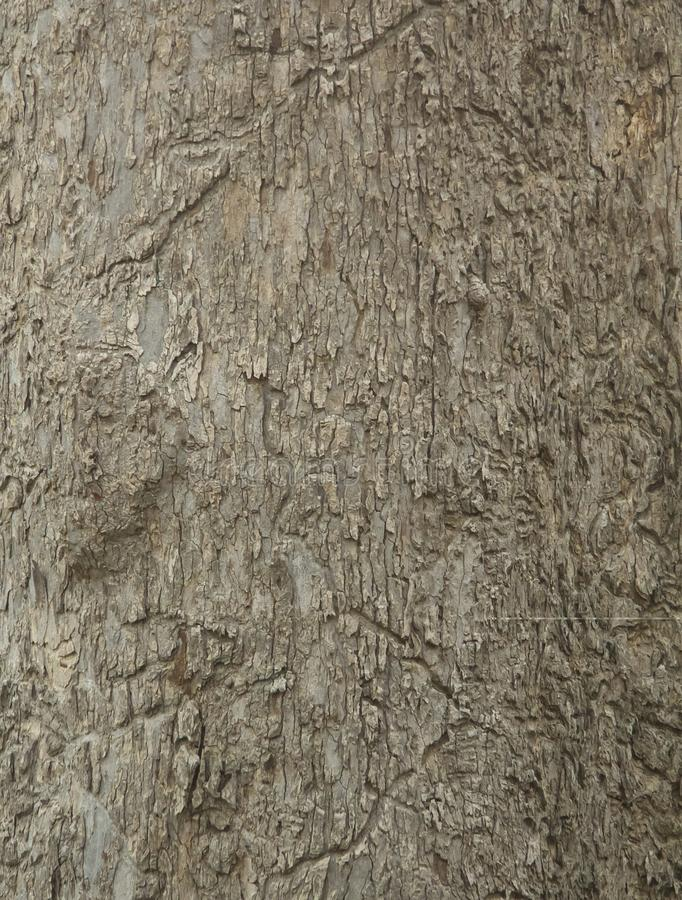 Wood bark texture eated by termites. background. royalty free stock photography