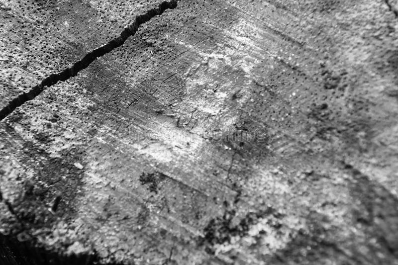Close-up wood bark of tree back and white background and texture royalty free stock images
