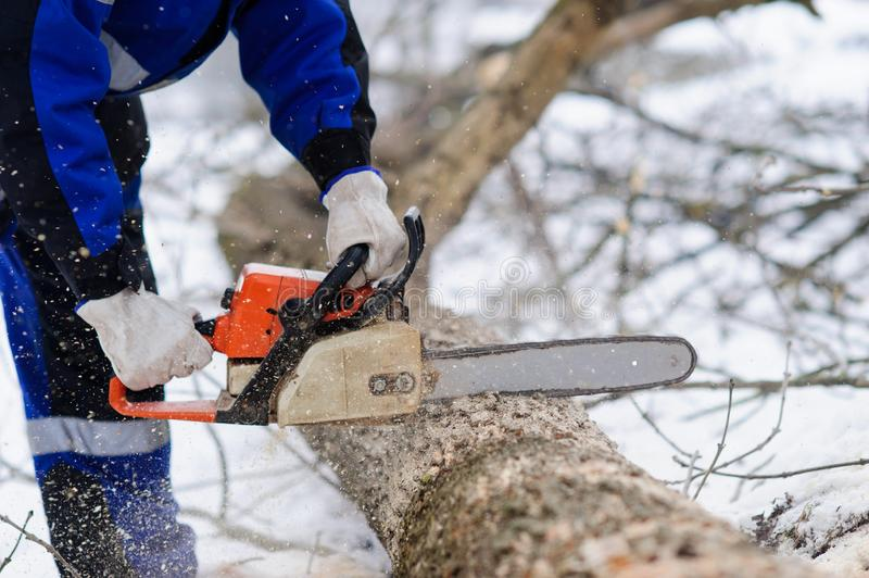 Close-up of woodcutter sawing chainsaw in motion, sawdust fly to sides. Wood felling, deforestation, action, adult, arborist, axeman, danger, equipment, feller royalty free stock photography