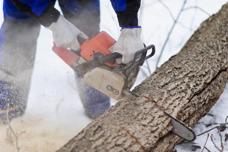 Close-up of woodcutter sawing chainsaw in motion, sawdust fly to sides. Wood felling, deforestation, action, adult, arborist, axeman, danger, equipment, feller royalty free stock images