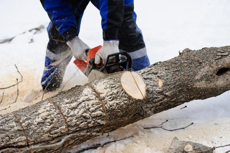 Close-up of woodcutter sawing chainsaw in motion, sawdust fly to sides. Wood felling, deforestation, action, adult, arborist, axeman, danger, equipment, feller stock images