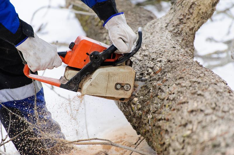 Close-up of woodcutter sawing chainsaw in motion, sawdust fly to sides. Wood felling, deforestation, action, adult, arborist, axeman, danger, equipment, feller stock photo