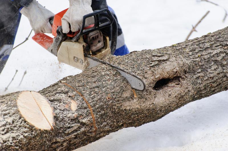 Close-up of woodcutter sawing chainsaw in motion, sawdust fly to sides. Wood felling, deforestation, action, adult, arborist, axeman, danger, equipment, feller royalty free stock photo