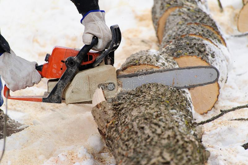 Close-up of woodcutter sawing chainsaw in motion, sawdust fly to sides. Wood felling, deforestation, action, adult, arborist, axeman, danger, equipment, feller stock photos