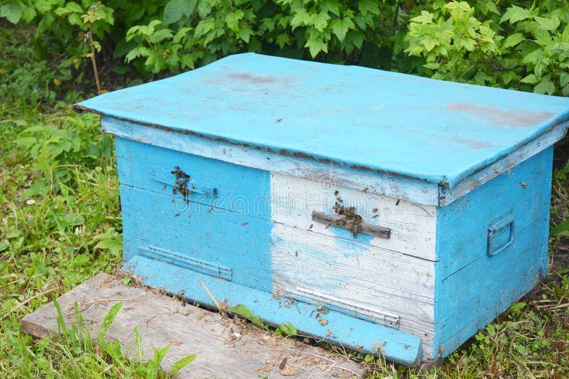 Close up on Wooden Dadant Blue Bee hive. Close up on Wooden Dadant Blue Bee hive in the garden royalty free stock images