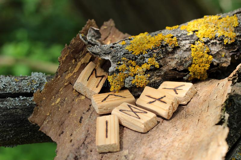 Close-up on wooden runic alphabet that lie on a dry bark from a tree. Near yellow moss. Runic Futhark in the element. Runic futark. The concept of the ancient royalty free stock images