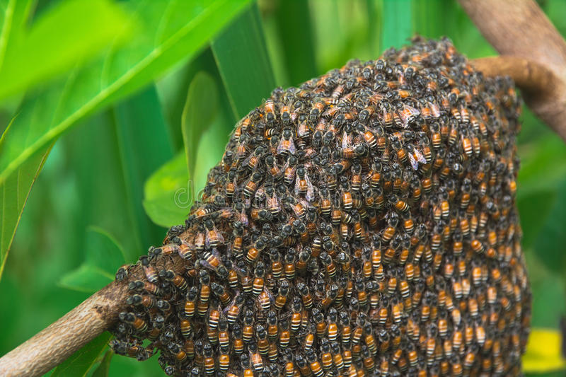 Close up of the working bees with honey cells on tree. stock photos