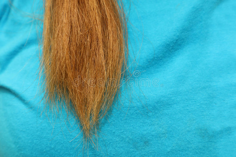 Wowan with n unhealthy hair. Close-up on wowan with n unhealthy hair stock photo