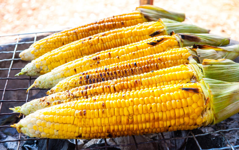 Close-up yellow corn royalty free stock image