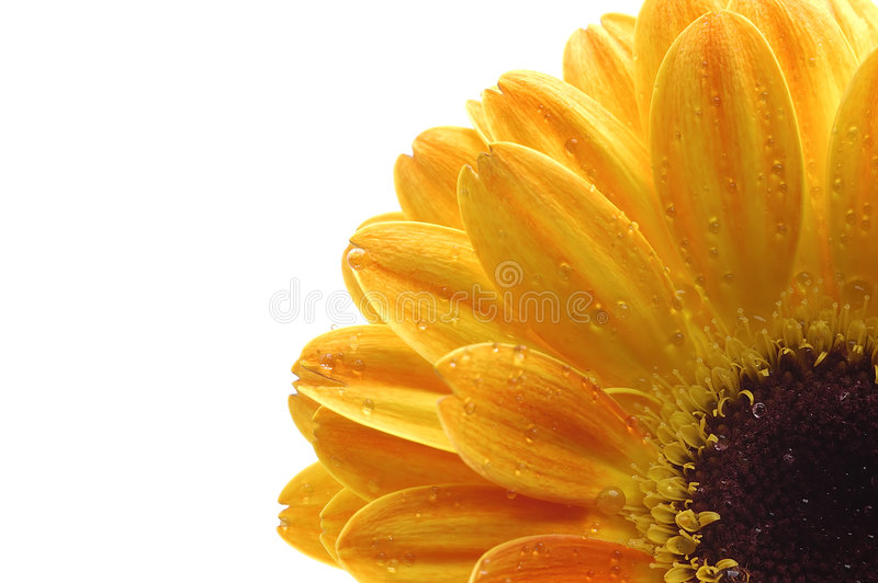 Download A Close Up Of A Yellow Flower Stock Photo - Image: 6038094