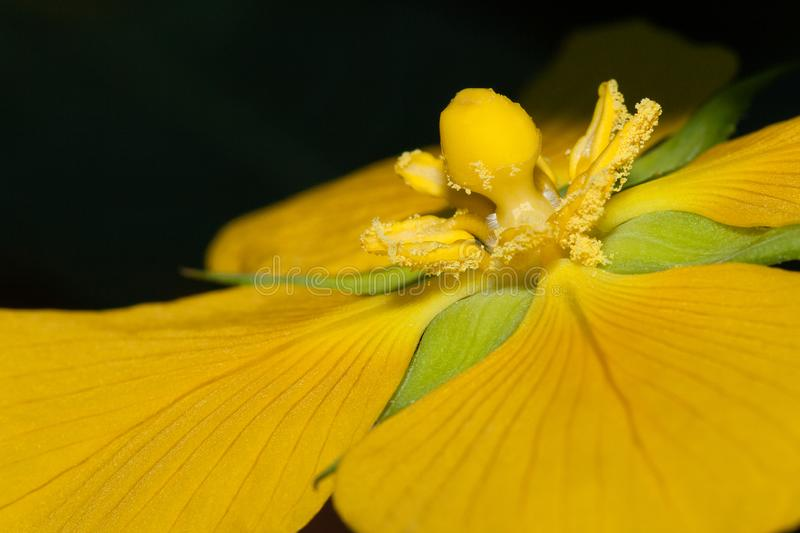 A close up of a yellow flower royalty free stock photography