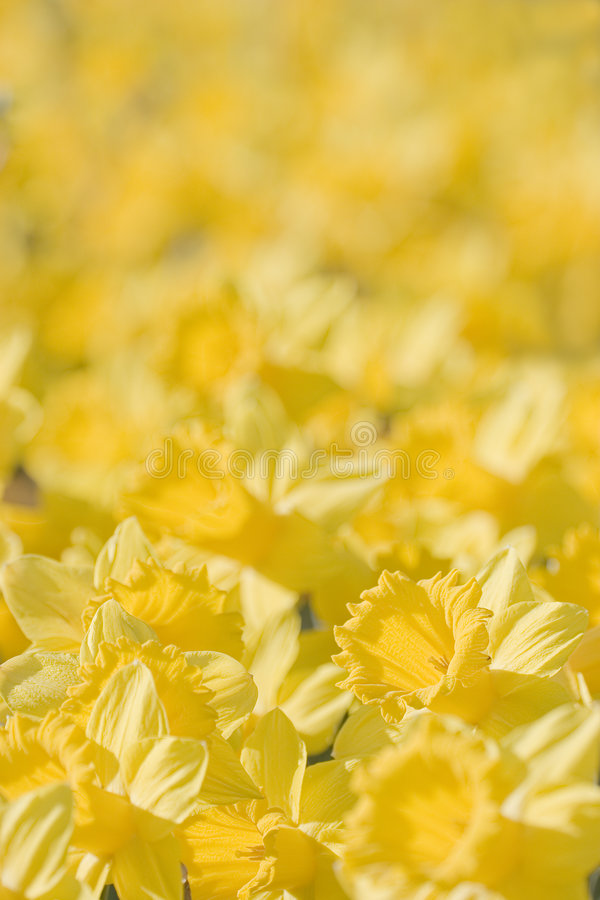 Close-up of yellow flowers stock images
