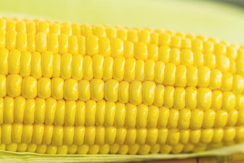 Close up yellow fresh corn stock photo