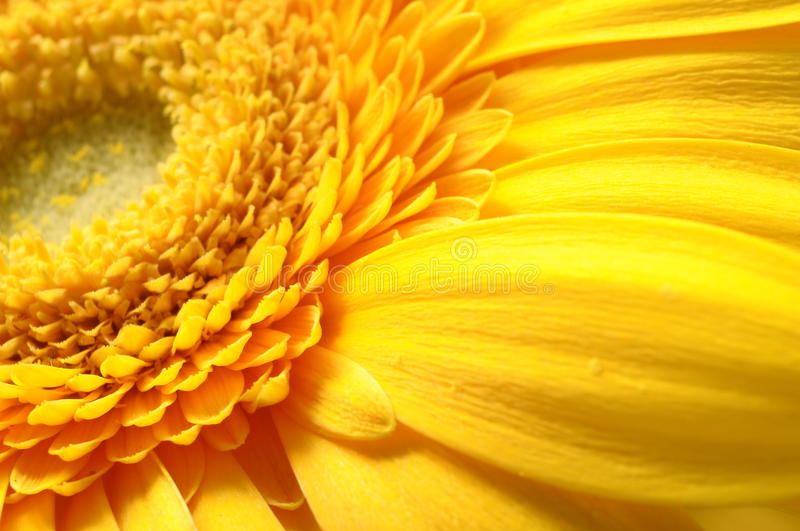 Download Close up of yellow petals stock image. Image of beauty - 25678977