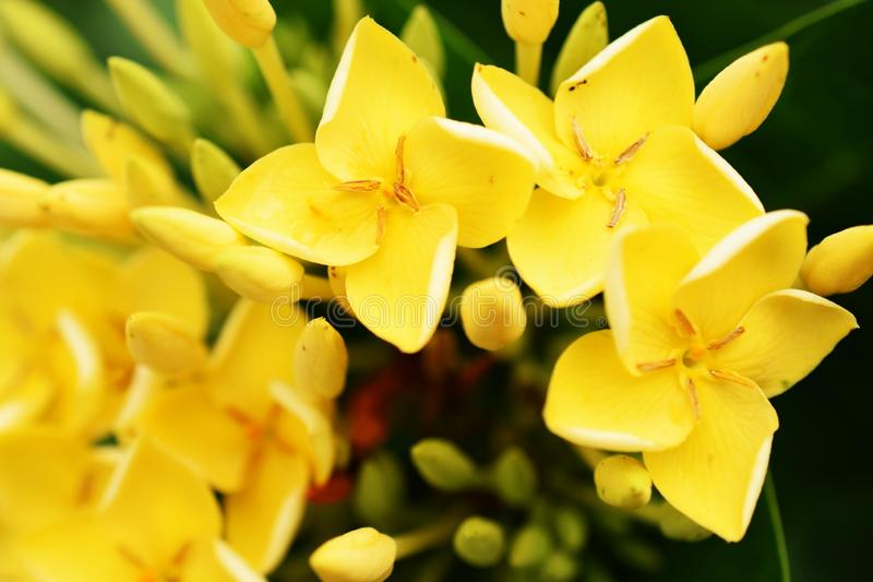 Yellow spike flower bouquet on nature background stock photo
