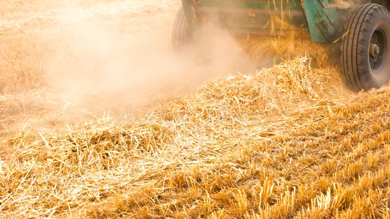 Close-up yellow straw on the field. Ears of wheat at field and harvesting machine royalty free stock photography