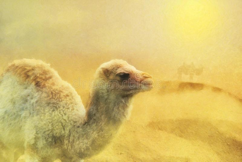 Close up on young camel on the desert, sand storm, digital pain. Ting stock images