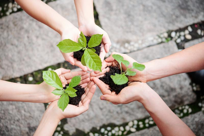 People plant new plants. Close-up of young people holding a green plants with soil in palm of their hands outdoors stock photography