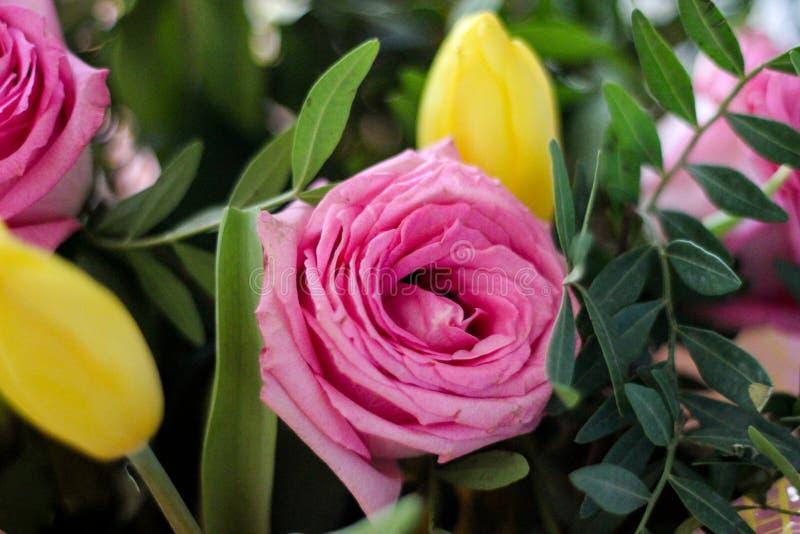 Close-upbeeld met roze rozen en gele tulp royalty-vrije stock foto's