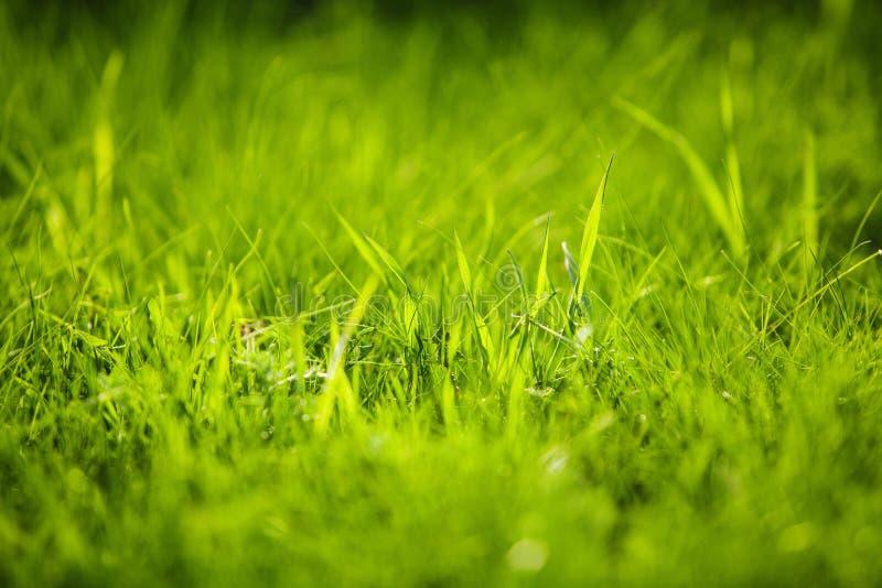 Close-upbeeld van de zomer sappig groen gras ter plaatse stock fotografie