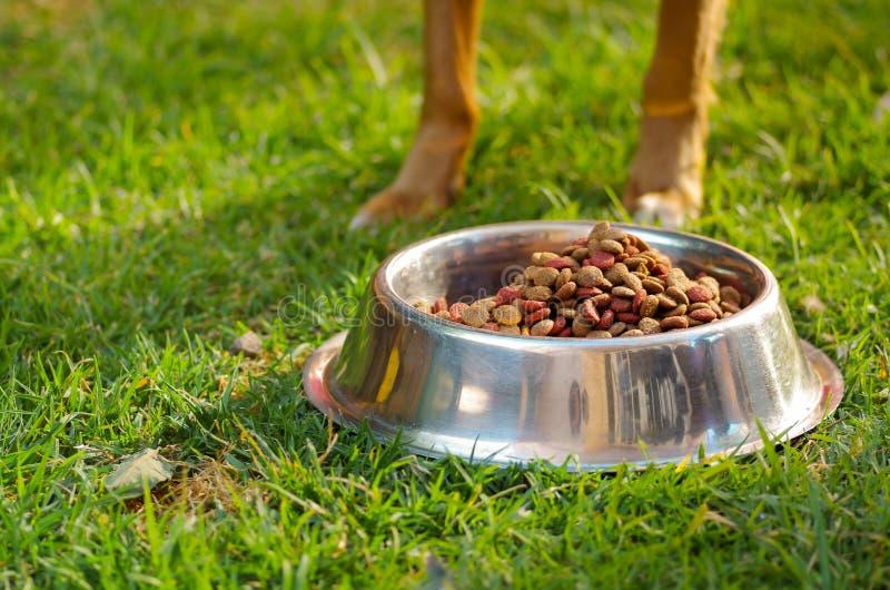 Close-upbenen van gemengde rassenhond die zich achter metaalkom bevinden met verse knapperige voedselzitting op groen gras, dier royalty-vrije stock foto