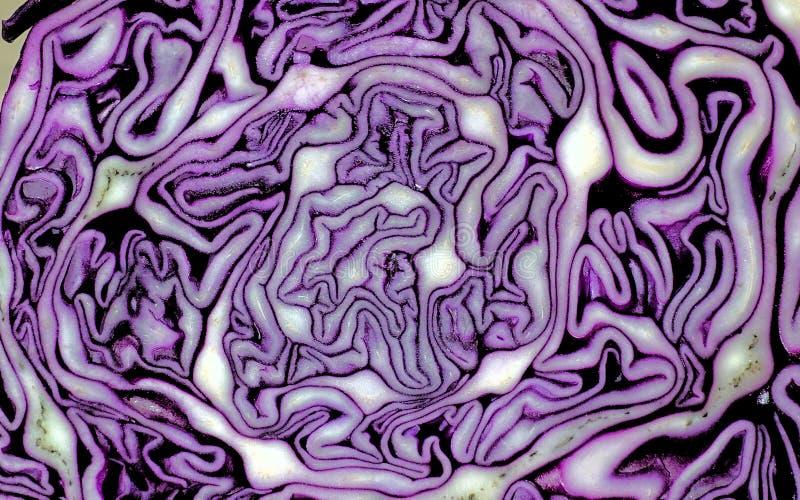 Close-upbesnoeiing van rode kool Abstracte violette witte achtergrond met vlotte lijnen royalty-vrije stock afbeeldingen