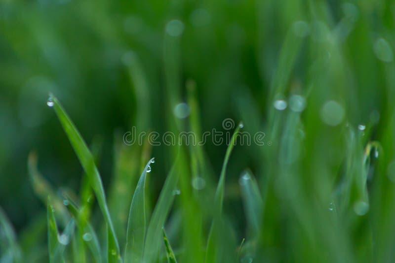 Close-updalingen van dauw op jong vers groen gras royalty-vrije stock foto