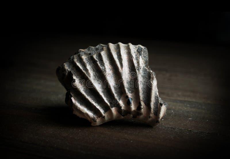 Close-updetail van een zeer oud fossiel (meer dan 350 miljoenen stock afbeeldingen