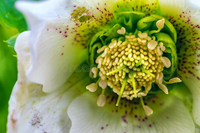 Close-upfoto van bloemmeeldraad en stampers royalty-vrije stock foto