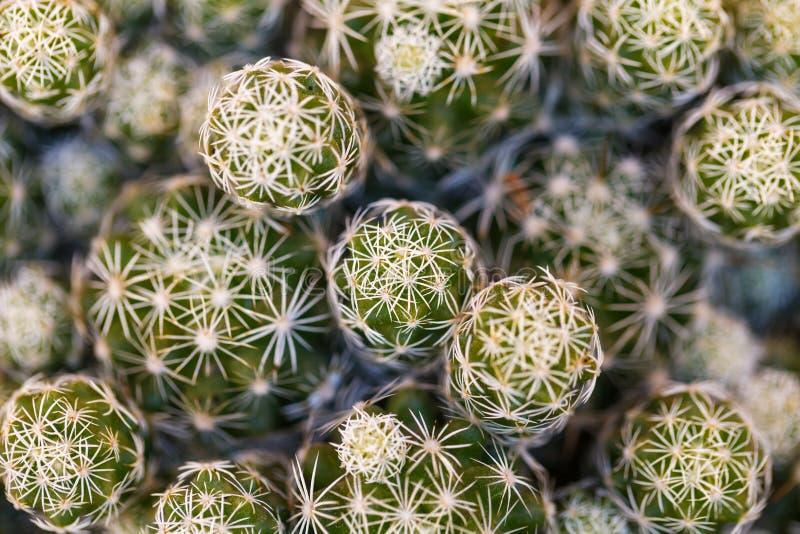 Close-upfoto van een cactus royalty-vrije stock afbeelding