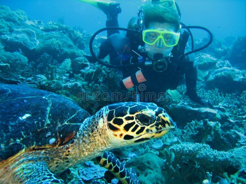 Close-upfoto van een schildpad en een jonge vrouwenscuba-duiker De duiker kijkt vooruit De schildpad is op voorgrond stock afbeelding
