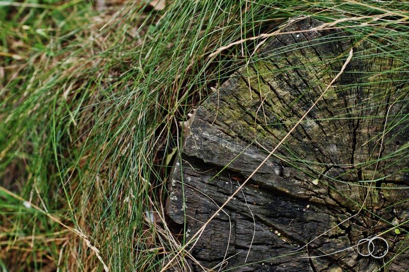 Close-upfoto van trouwringen op de stomp stock afbeeldingen