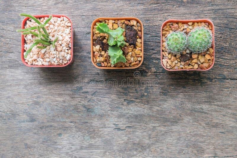 Close-upgroep cactus in plastic witte en bruine pot op houten bureau geweven achtergrond in hoogste mening met exemplaarruimte stock afbeelding