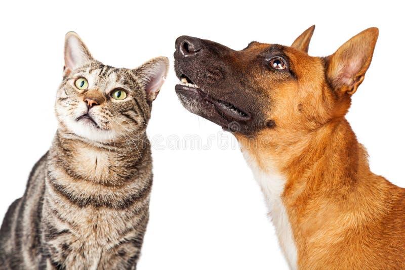 Close-upherder Dog en Cat Looking Side royalty-vrije stock afbeelding
