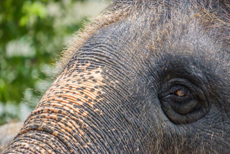 Close-uphoofd van olifant stock fotografie