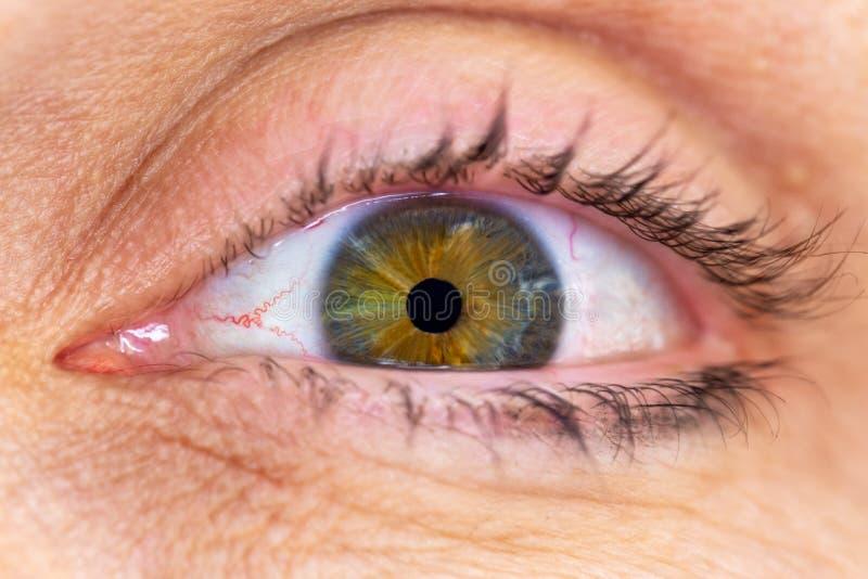 Close-upmacro van een menselijk oog met groene en bruine iris met het omringen van rijpe huid wordt geschoten die stock afbeelding
