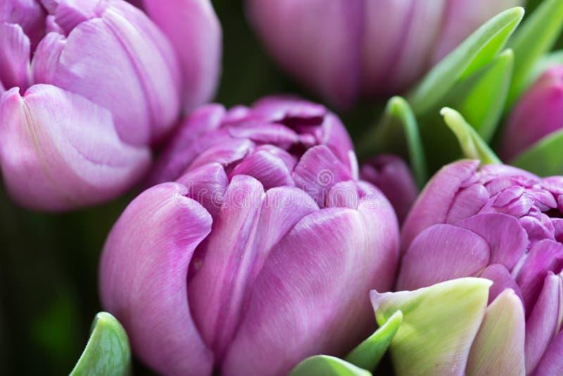 Close-upmacro van tulp wordt geschoten die royalty-vrije stock afbeelding