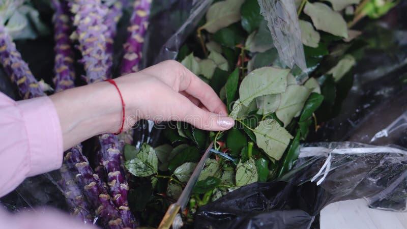 Close-upmening van bloemist op het werk: vrouwenbesnoeiingen verpakte rozen in een bloemwinkel stock foto