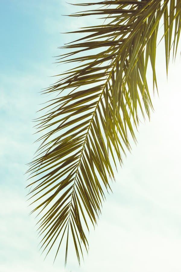 close-upmening van mooi groen palmblad stock afbeeldingen
